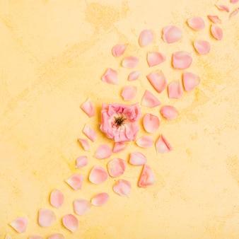Vue de dessus de la belle rose avec des pétales
