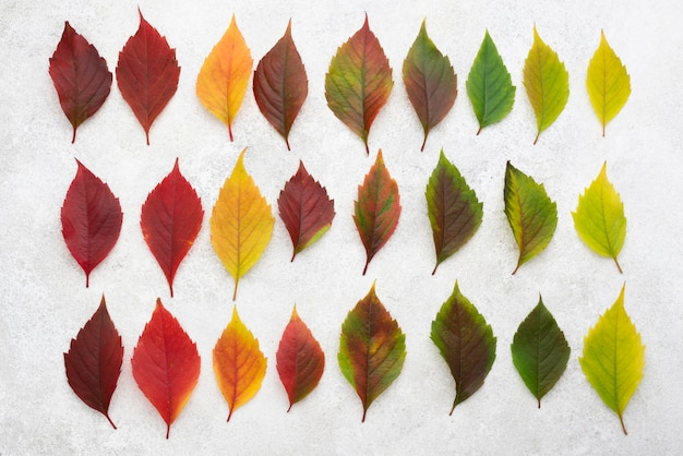 Vue de dessus de belles feuilles d'automne colorées