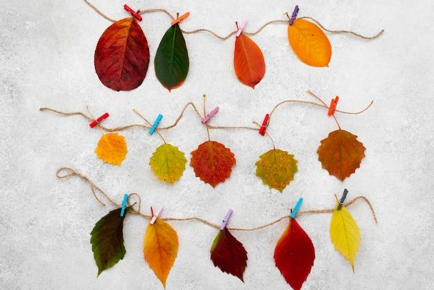 Vue de dessus de belles feuilles d'automne sur des cordes