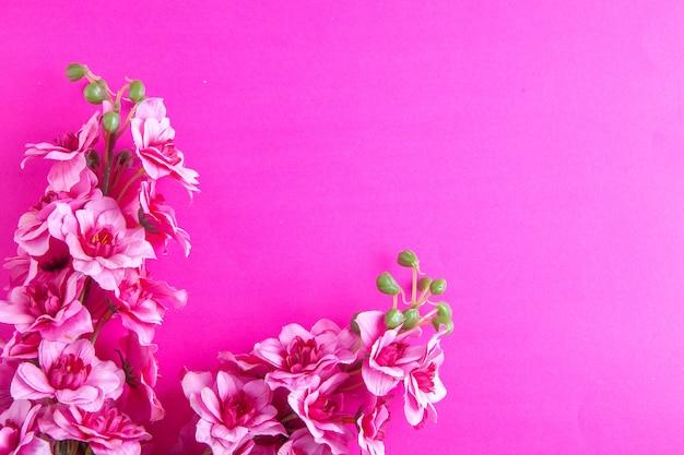 Vue de dessus belles fleurs sur surface rose vacances ethniques concept de printemps coloré fleuri