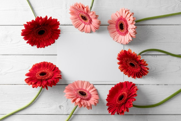Vue de dessus de belles fleurs