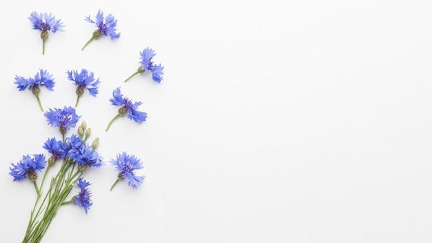 Vue de dessus bleuets avec espace copie