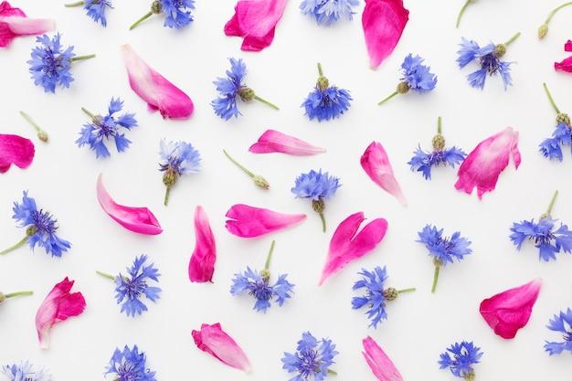 Vue de dessus bleuets et pétales roses