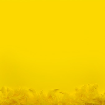 Vue de dessus boa de plumes jaunes avec espace copie