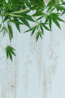 Vue de dessus de la bordure de feuilles de cannabis vert sur un bois bleu clair
