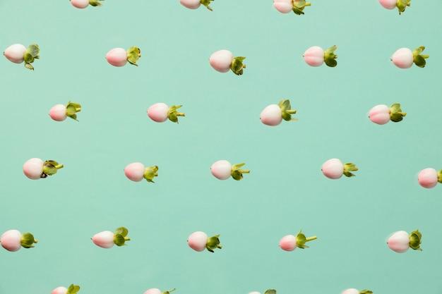 Vue de dessus des boutons floraux de printemps
