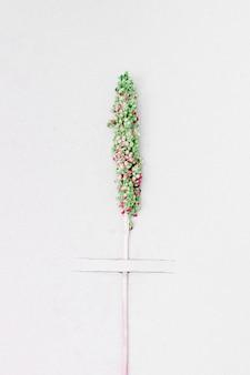 Vue de dessus d'une branche verte d'une plante