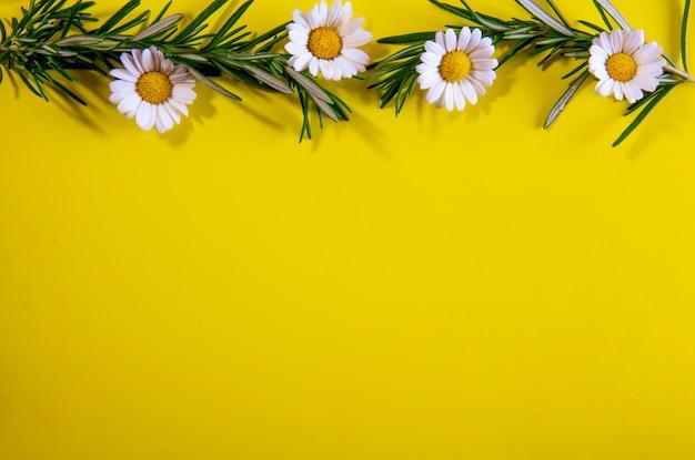 Vue de dessus des branches de romarin espace copie avec camomille sur fond jaune