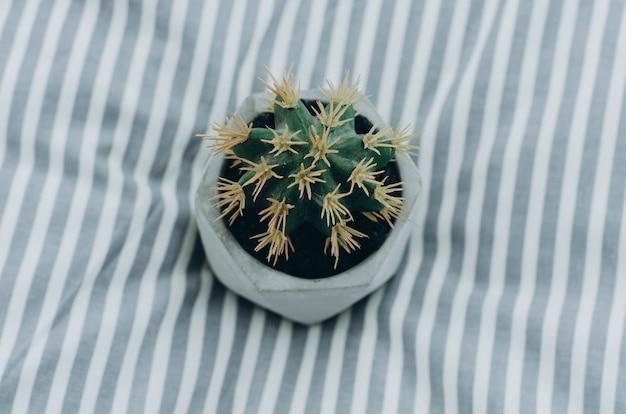 Vue de dessus de cactus à la maison