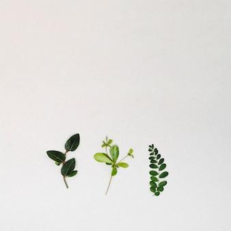 Vue de dessus cadre de feuilles vertes