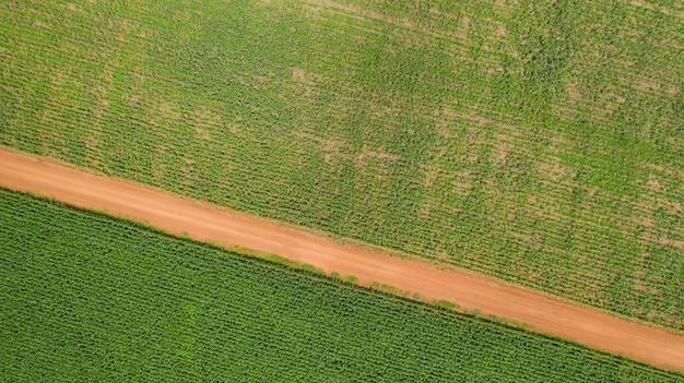 Vue de dessus des champs de maïs