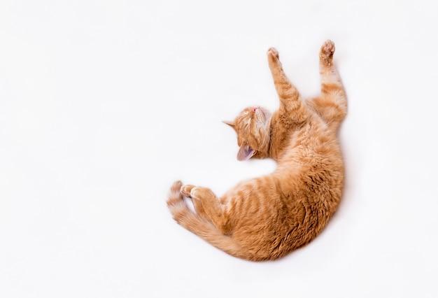 Vue de dessus d'un chat roux aux pattes tendues
