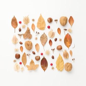 Vue de dessus des châtaignes avec des feuilles d'automne