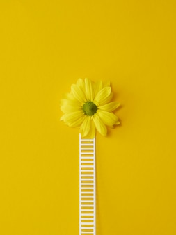 Vue de dessus composition du concept d'optimisme avec des fleurs