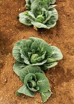 Vue de dessus concept de ferme de salade naturelle