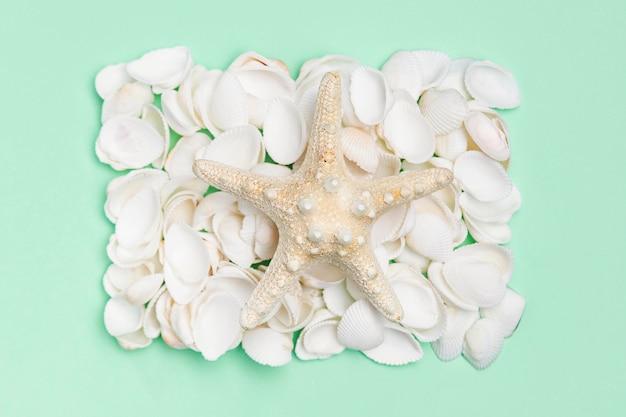 Vue de dessus des coquillages avec des étoiles de mer