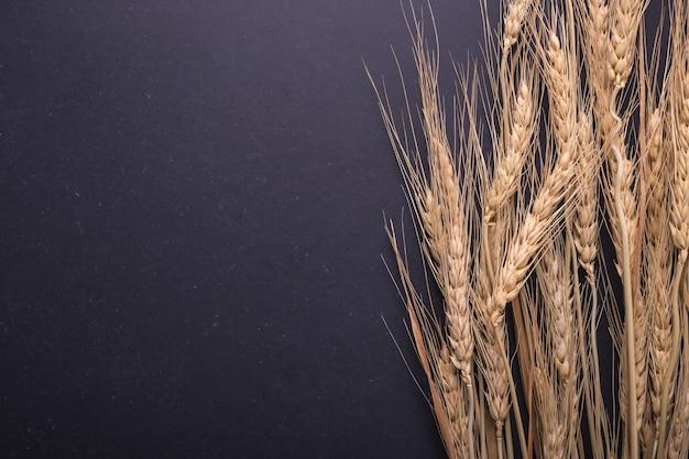 Vue de dessus de la culture de blé séché sur tableau noir