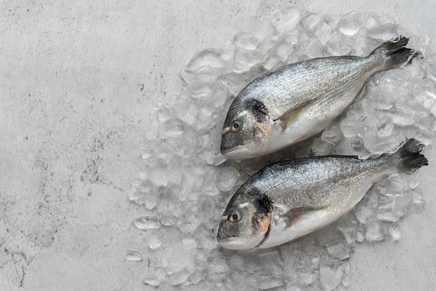 Vue de dessus délicieux arrangement de fruits de mer