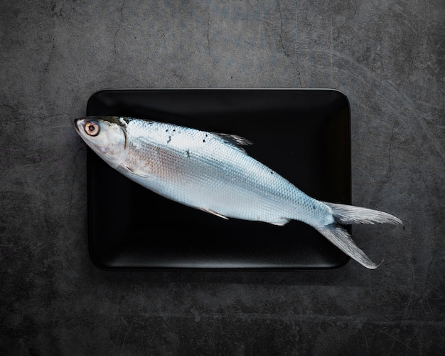 Vue de dessus de délicieux poissons sur fond de stuc