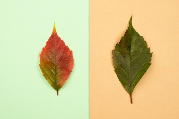 Vue de dessus de deux feuilles