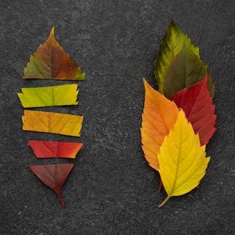 Vue de dessus de différentes feuilles d'automne