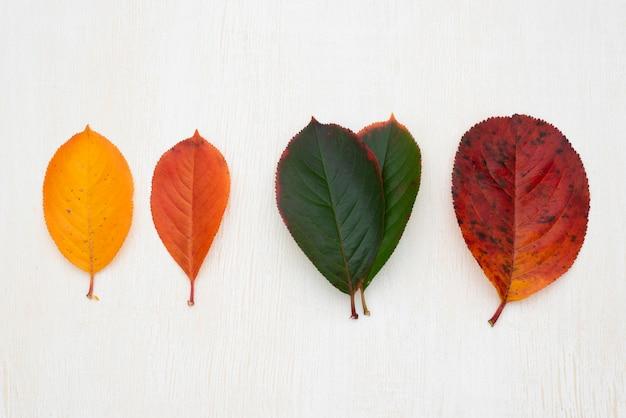 Vue de dessus de différentes feuilles colorées