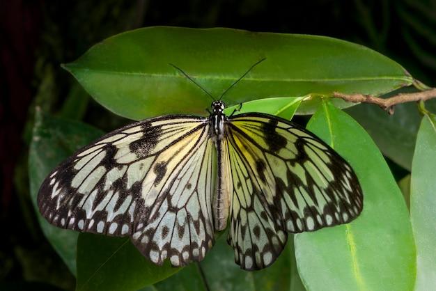 Vue de dessus doux papillon sur feuille