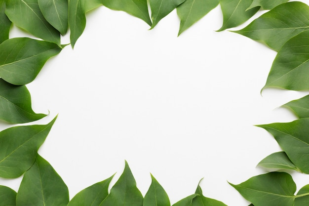 Vue de dessus du beau concept de cadre de feuilles de lilas