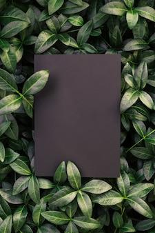 Vue de dessus du cadre de la feuille de pervenche et de l'espace de copie sur fond noir isolé feuilles vertes avec papier...
