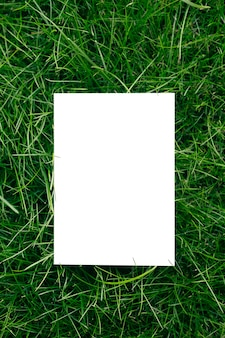 Vue de dessus du cadre en herbe de jardin verte et espace de copie sur fond blanc feuilles vertes avec pa...