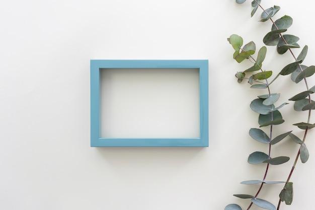 Vue de dessus du cadre de photo de bordure bleue et de la branche d'eucalyptus populus