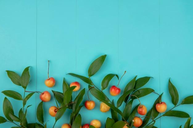 Vue de dessus du cerisier blanc avec des branches de feuilles sur une surface turquoise