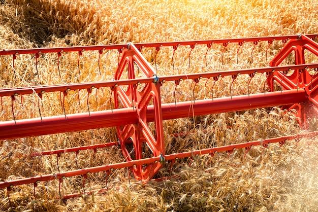 Vue de dessus du champ de blé de récolte de moissonneuse-batteuse