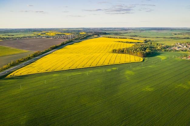 Vue de dessus du champ de colza jaune et du village. un champ semé de colza en biélorussie. le village est un champ de colza.