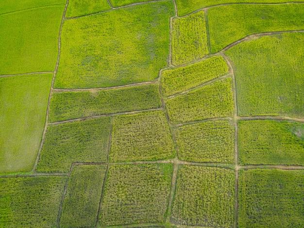 Vue de dessus du champ de riz d'en haut avec chemin des parcelles agricoles de différentes cultures en vert, vue aérienne des rizières vertes, arrière-plan de la ferme agricole de la nature, vue à vol d'oiseau