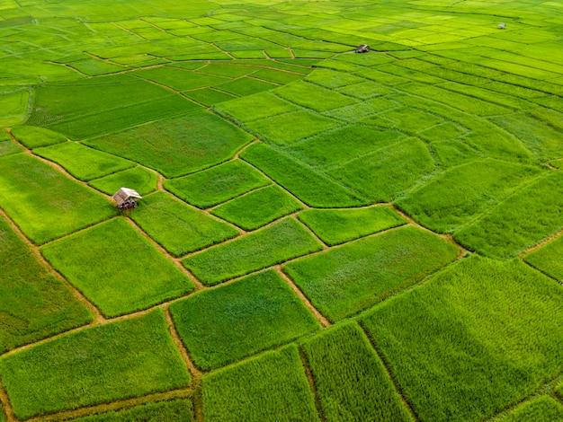 Vue de dessus du champ de riz en terrasses vertes avec petite cabane