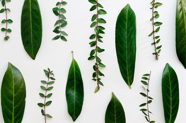 Vue de dessus du concept de feuilles vertes