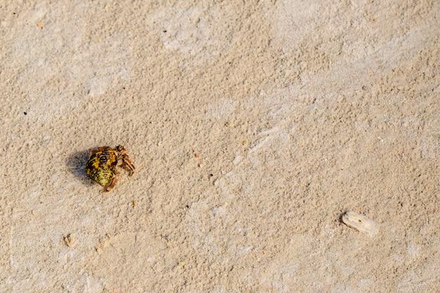 Vue de dessus du crabe ermite sur la plage.