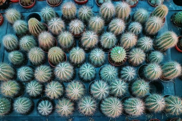 Vue de dessus du groupe de cactus en pots et assiette brune à la pépinière intérieure.