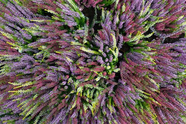 Vue de dessus du jardin plein de fleurs à longues tiges colorées en fleurs