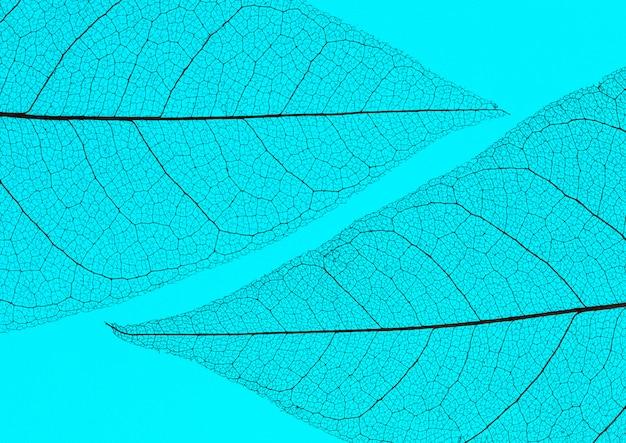 Vue de dessus du lamina de feuilles transparentes colorées
