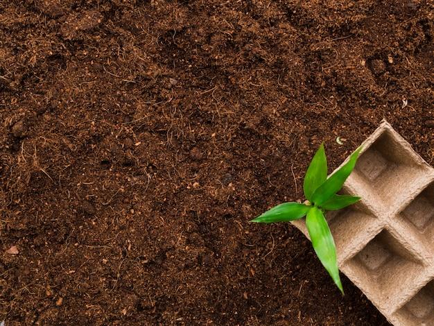 Vue de dessus du lit de germination sur le sol