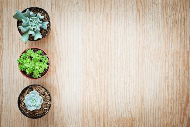 Vue de dessus du mélange trois succulentes de cactus sur fond en bois