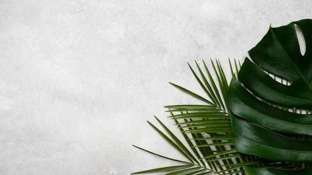 Vue de dessus du monstera et d'autres feuilles avec espace copie
