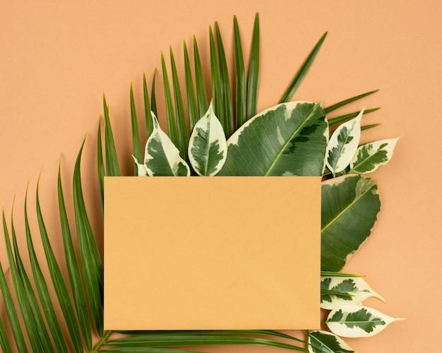 Vue de dessus du morceau de papier avec des feuilles de plantes