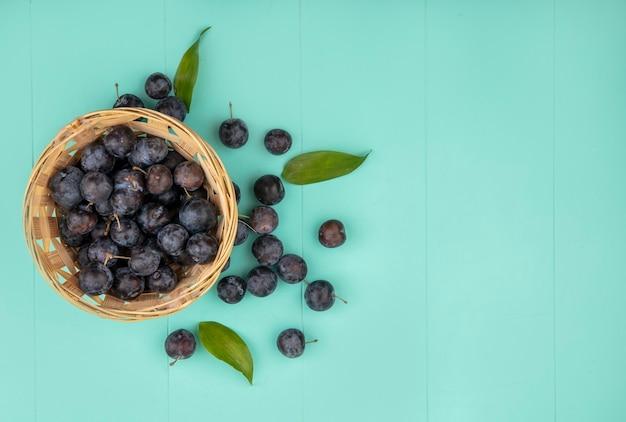 Vue de dessus du petit fruit astringent globuleux sombre prunelles sur un seau avec des feuilles sur un fond bleu avec copie espace