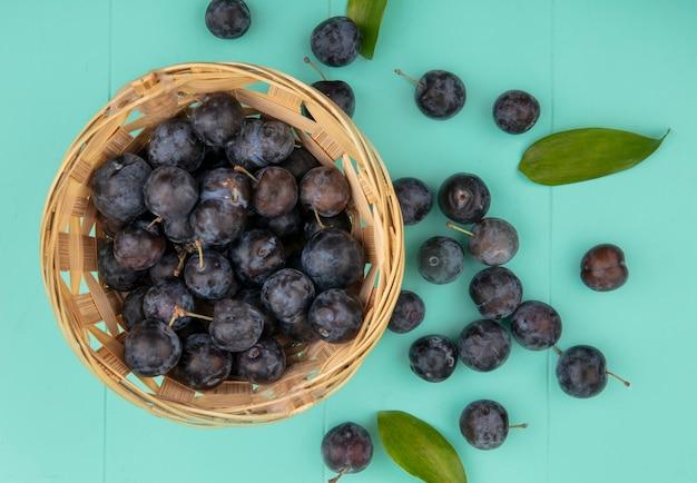 Vue de dessus du petit fruit astringent globuleux sombre prunelles sur un seau sur un fond bleu