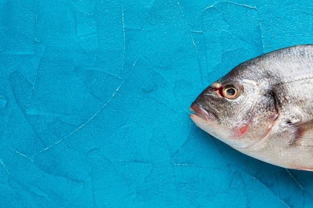 Vue de dessus du poisson sur fond bleu