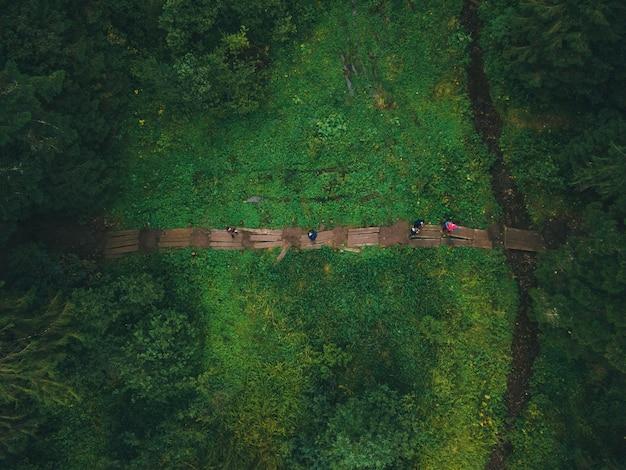 Vue de dessus du sentier dans le concept de randonnée en forêt