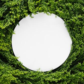 Vue de dessus entre les feuilles